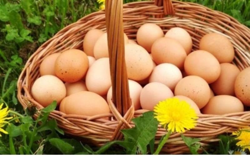 Domaca jaja-slobodan uzgoj