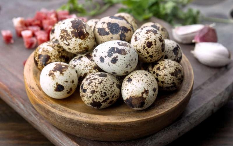 Svježa oplođena i ljekovita jaja japanskih prepelica