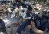 Nišlija brine o 800 napuštenih pasa