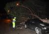 Tornado pogodio Otavu, srušena stabla, kuće, ljudi bez struje