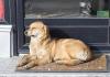 Tri tendera propala, Bijeljina još bez azila za pse