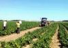 Semberski poljoprivredni prerađivači ispunili plan proizvodnje