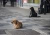 Bijeljina: Azil radi, psi lutalice i dalje na ulici
