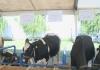 Drugi dan Interagra u znaku stočarstva