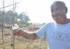 Patkovača: Višnja procvjetala u oktobru