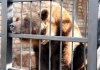 Zimi nije kraj – medvedi u zoo-vrtu u Jagodini videli svoju senku