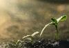 Amerikanka osmislila ekološke sahrane - postanite đubrivo i vratite dug planeti