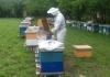 Pčelari u Semberiji vode mrtvu trku s vremenom