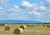 Dobar rod pšenice u Semberiji