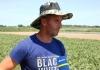 Poljoprivrednici razočarani: Semberski kupus ne vrijedi iznositi sa njive
