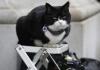 Mačak Forin ofisa Palmerston odlazi u penziju