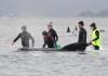 Tasmanijski pomor kitova – više od 380 uginulo u jednom od najgorih nasukavanja u istoriji