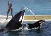 Francuska zabranjuje divlje životinje u cirkusima i marinskim parkovima