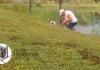 Iščupao štene iz čeljusti aligatora VIDEO