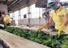 Semberka Janja: Očuvana proizvodnja i zdravlje svih zaposlenih