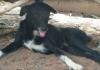 Pas heroj: Spasio život bebi zakopanoj u zemlju! VIDEO