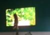 Snimak pregledali milioni: Zbog čega je vlasnica zabranila mačku da gleda TV