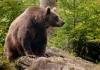 Šetači u banjalučkom naselju sreli medvjeda