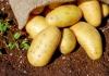 Propadaju tone krompira, sezonski prelevmani bi spasili domaću proizvodnju
