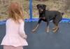 VIDEO Igra djevojčice i psa postala hit na internetu