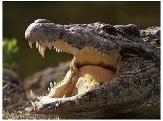 Krokodili u predgrađu Londona