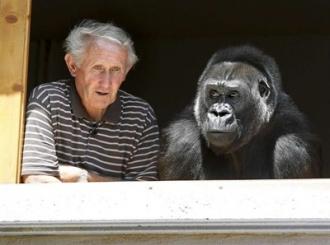 Francuski par živi s odraslom gorilom