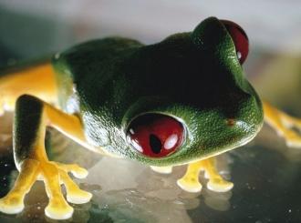 Uz pomoć žaba: Naučnici otkrili lijek koji sprečava širenje raka kože