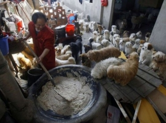 Bivši kuvar udomio 140 pasa lutalica