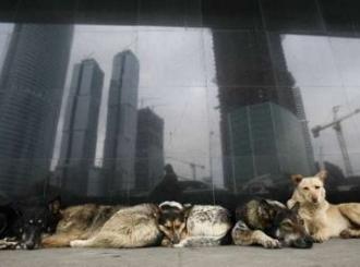 Psi pojeli vlasnika nakon što ih nije hranio dvije sedmice