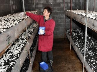 Stoja počela uzgajati šampinjone da bi bila više vremena s djecom