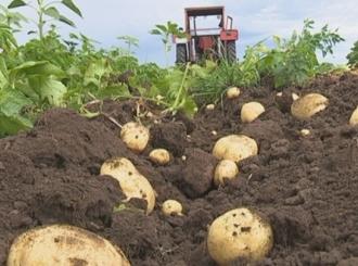 Počela sadnja krompira u Semberiji