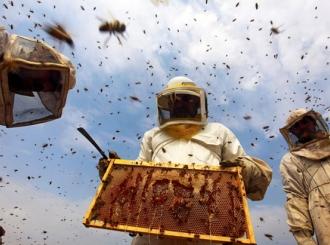 Pesticidi kobni za košnice