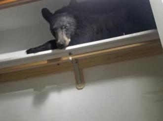 Otvorili plakar, a u njemu spavao medved