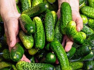 Zabranjen uvoz preko 20 tona kornišona iz Srbije