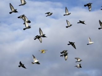 Kina zabranila let dronovima, zmajevima i golubovima