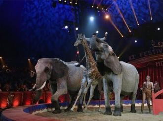 Kalifornija zabranjuje životinje u cirkusima