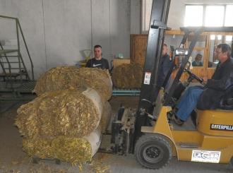 Proizvodnja duvana u Semberiji sve manje isplativa
