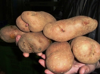 Zabranjen uvoz krompira iz Grčke, mandarina iz Turske, oraha iz Rumunije