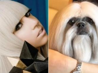 Proslavila ga je Lejdi Gaga – pas zvezda Instagrama