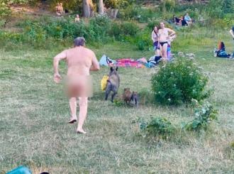 Divlja svinja ukrala nudisti laptop, vlasnik je jurio