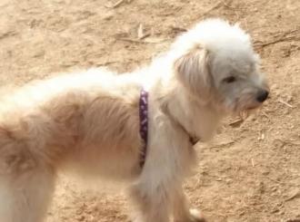 Pas išao 60 kilometara do kuće da nađe vlasnika