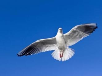 Pronađena poruka goluba pismonoše iz Prvog svetskog rata