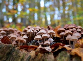 Iz šume možete ponijeti samo kilogram gljiva ili bilja