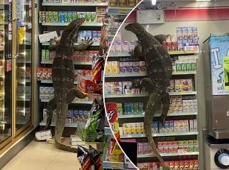 Kad godzila krene u prodavnicu u Bangkoku VIDEO