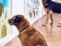 U Londonu otvorena prva umjetnička izložba za pse