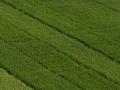 Bijeljina: Za podsticaj poljoprivredne proizvodnje 1,1 milion KM