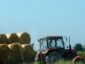 Ukupan rod pšenice procijenjen na oko 171.000 tona