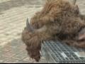 Nemci traže oproštaj od Poljaka zbog ubistva bizona