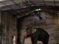 Šer spasava slona okovanog već 27 godina