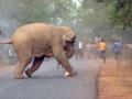 Fotografija zapaljenog slončeta osvojila nagradu